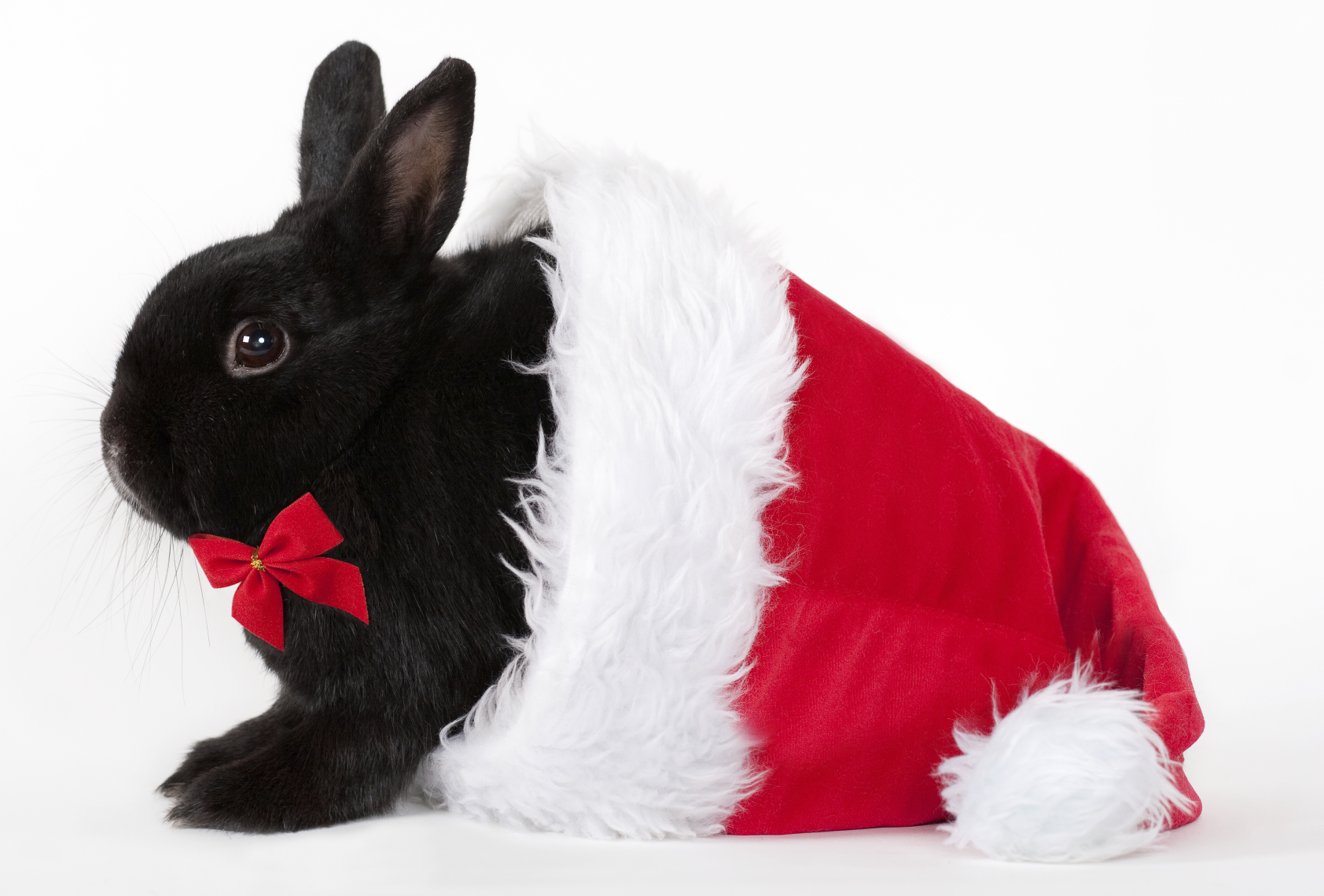Bunny in santa hat iStock_000014853452Medium.jpg