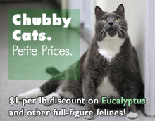 Chubbycats-pagepic.jpg