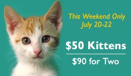 Kitten-Promo[1].png