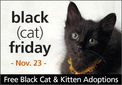 black-cat-friday-hp[1].jpg