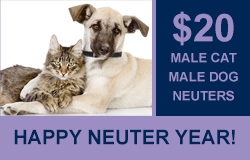 neuter-year-hp.jpg