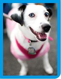 pinkdog-web-bordered[1].jpg
