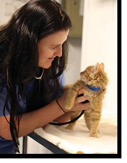 vet pic with kitten